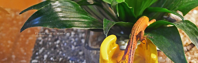 カナヘビ飼育ブログ メイン画像