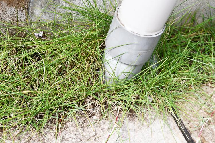 カナヘビがいた芝生