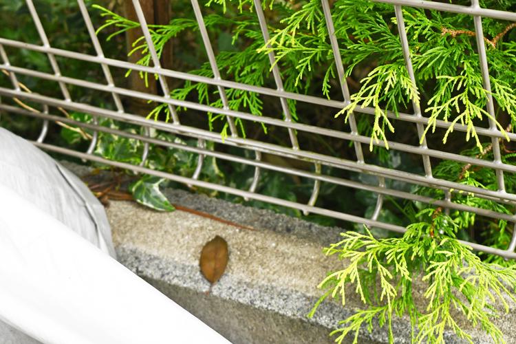 コンクリートの上にいるカナヘビ