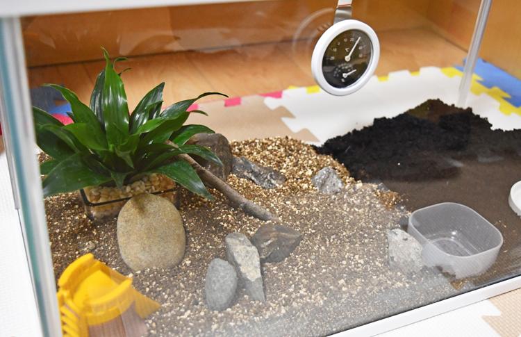 カナヘビ飼育用の水槽