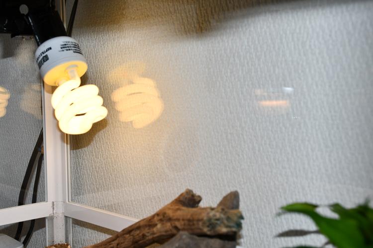 紫外線ライト(UVBライト)