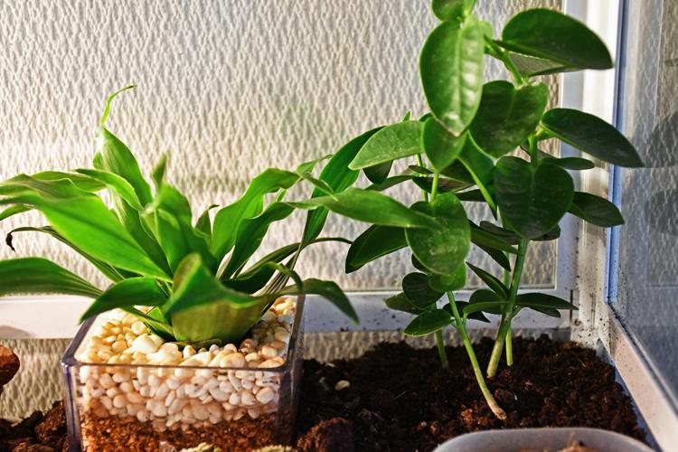 ケージ内の観葉植物