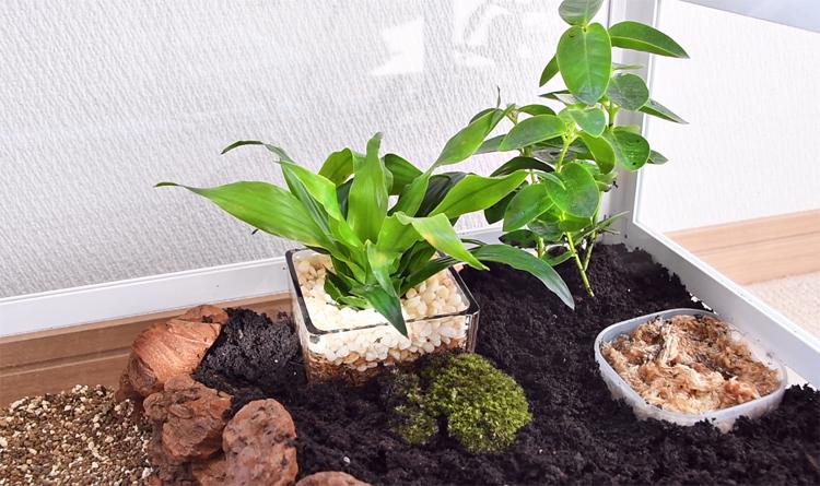 腐葉土に植物を植える